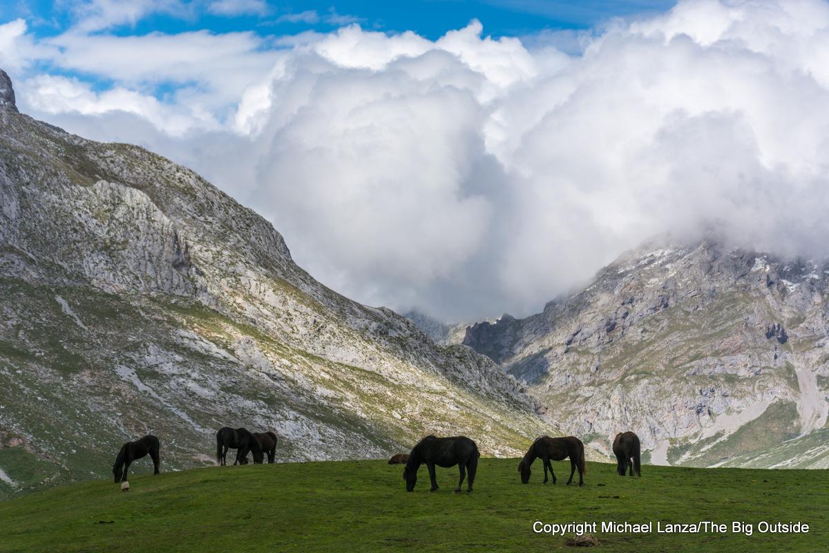 Horses in Picos de Europa National Park, Spain.