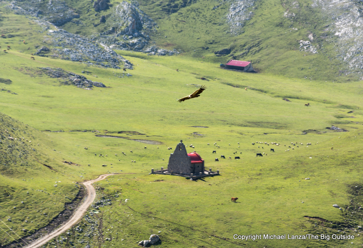 A vulture and building ruins in Picos de Europa National Park, Spain.