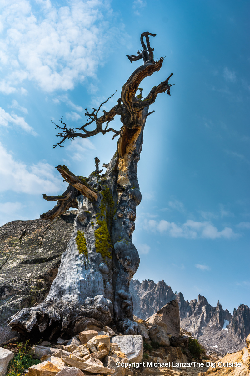 Snag along Trail 154 to Cramer Divide, Sawtooth Mountains, Idaho