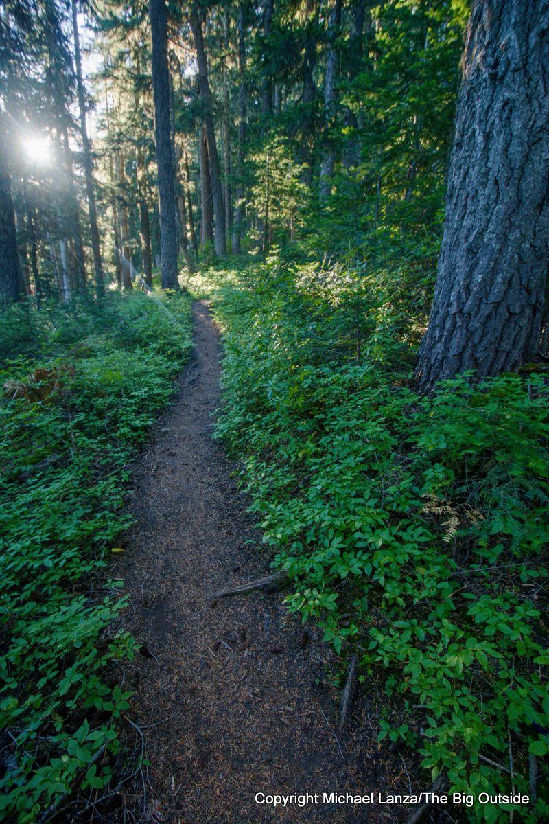The Wonderland Trail, Mount Rainier National Park.