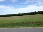 Lots of flat land along the path