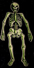 Jointed Skeleton