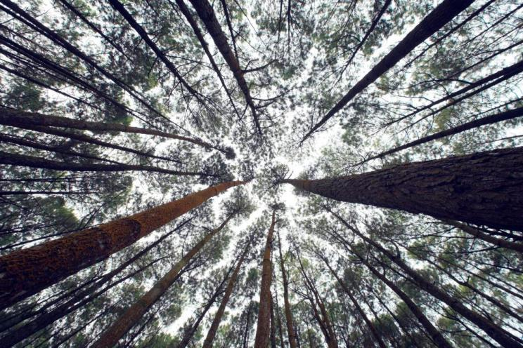 Looking up from forest floor