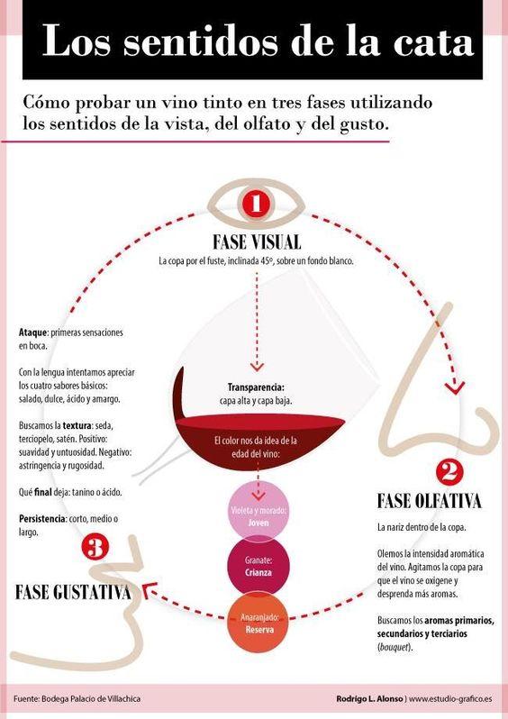 15 infografías para aprender sobre la degustación de vinos - The Big Wine  Theory