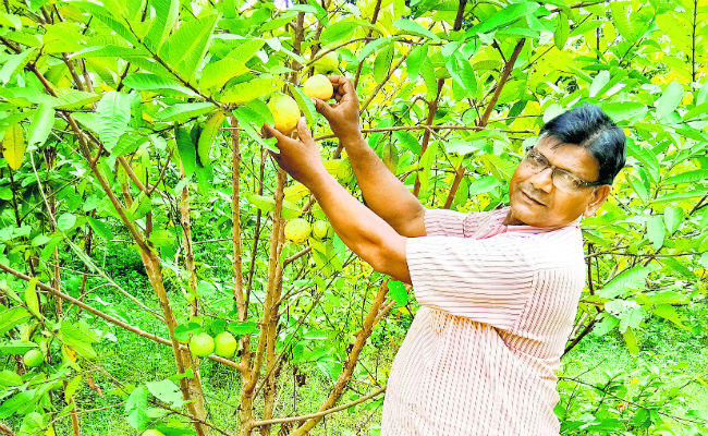 Guava tastes like Mango in Biharsharif, Scientists surprised | The Bihar News