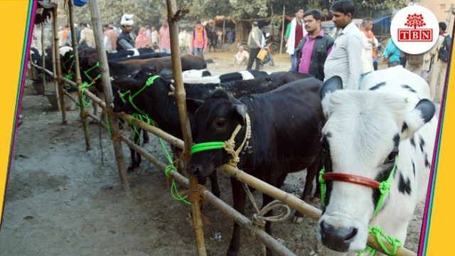 Sonpur Mela is known for the world largest cattle fair   The Bihar News