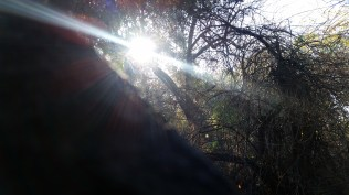 California sunshine.