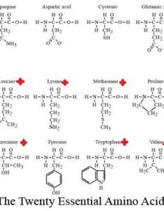 aminoacids also essential amino acids thebiochemeffect rh wordpress