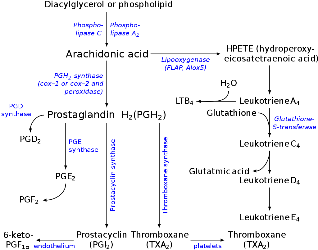 Eicosanoids - definition. classes. functions. synthesis