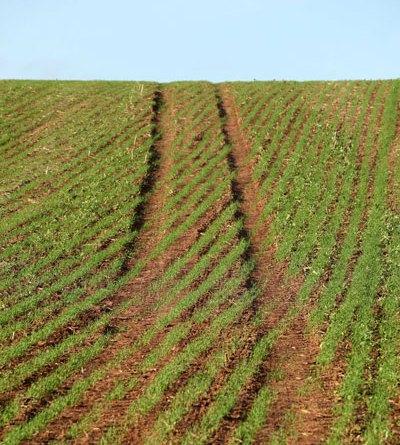Agricultural biostimulants
