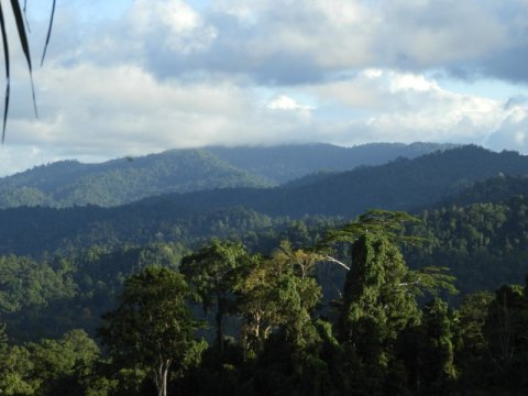 Tropical forest diversity