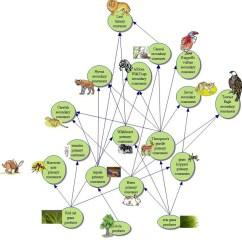 Savanna Animal Food Chain Diagram Single Volume Pot Wiring Flow Of Energy Biome Ebony S Web