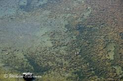 Forestland mirage