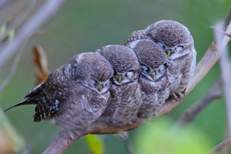 how do birds sleep at night