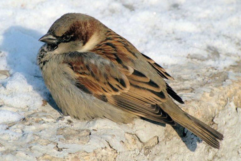 how do birds sleep