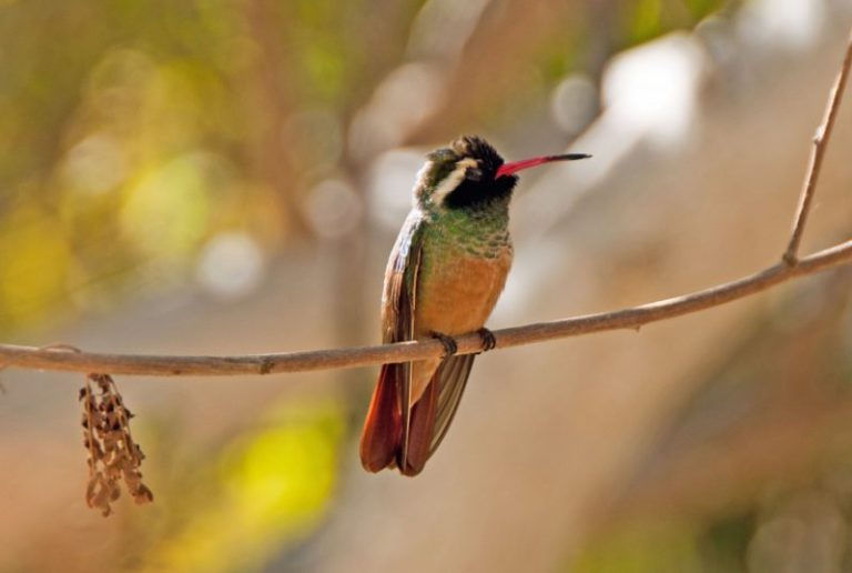 Hummingbird and Sleeping