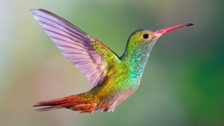 Where do Hummingbirds Sleep