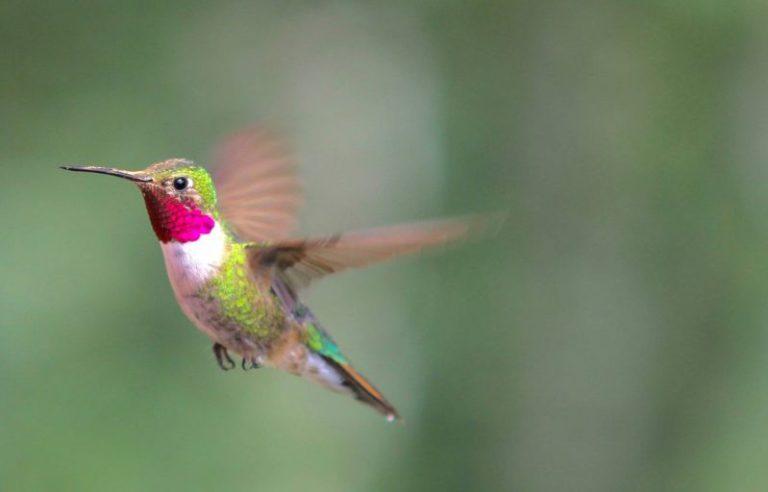 Weight of a Hummingbird