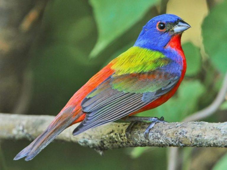 Birds of South Carolina