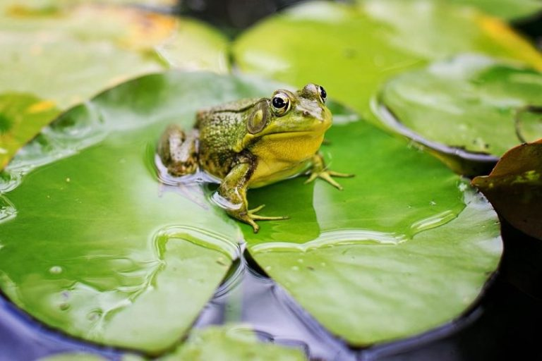 What Animal Eats Frogs?