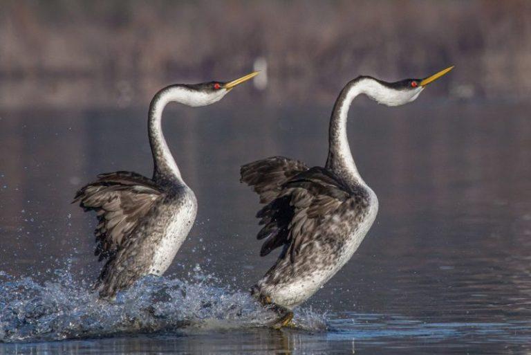 birds of maine