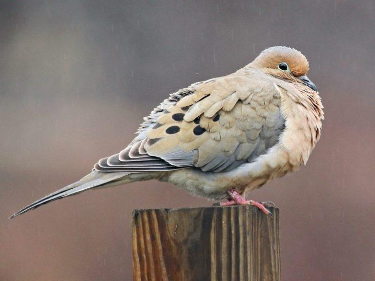 birds of colorado