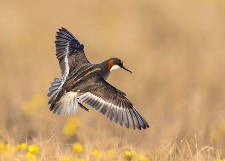 Birds of Oklahoma