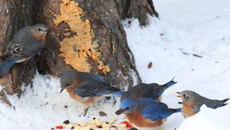 What Bluebirds Won't Eat?