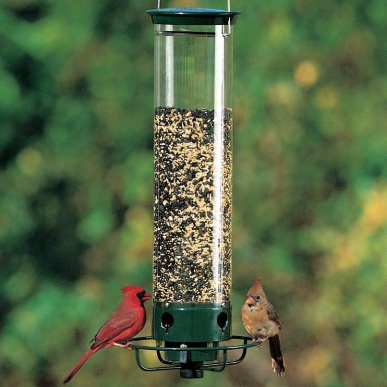 Droll Yankees Bird Feeder