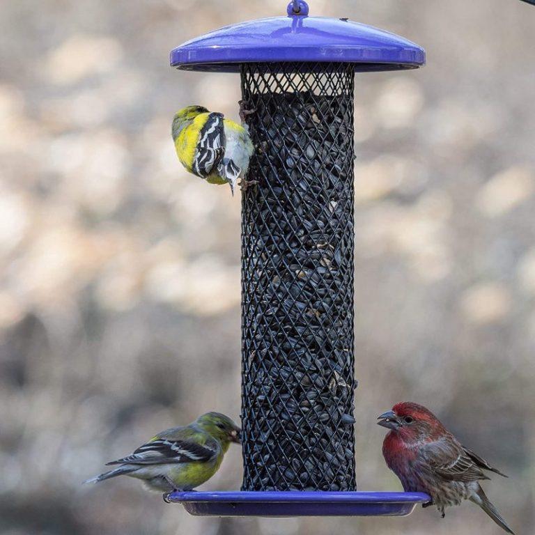 Perky-Pet 080086 YSSF00347 Finch Bird Feeders