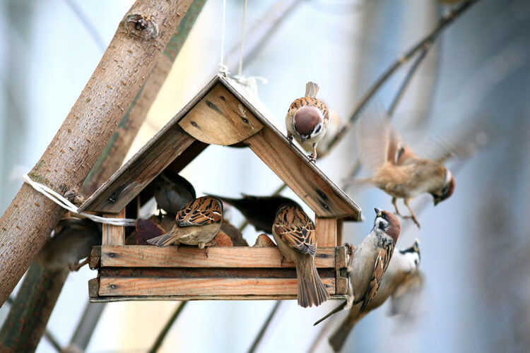 Reviews Best Bird Houses Overall