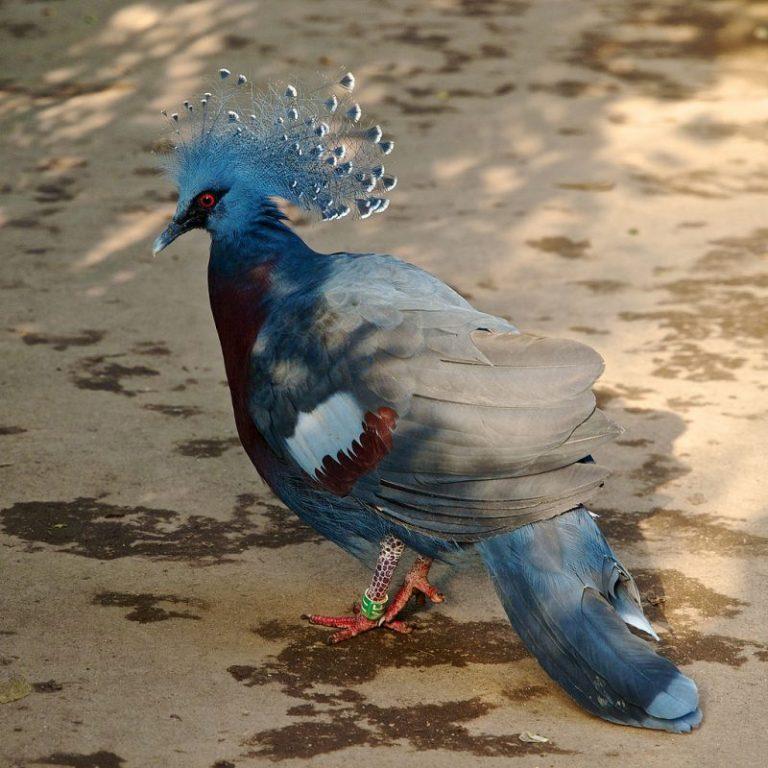 weirdest birds