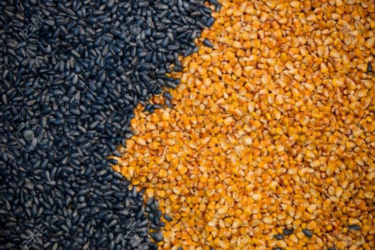Corn and Sunflower Seeds