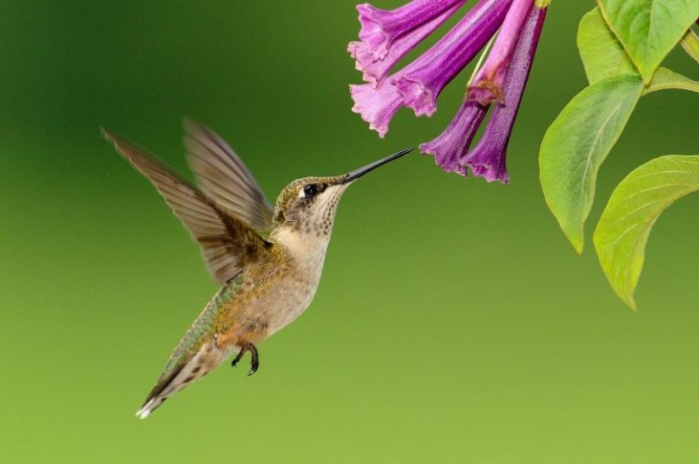 Plant Bee and Hummingbird Friendly Flowers