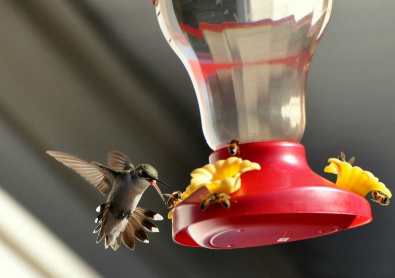 how to keep bees away from hummingbird feeders