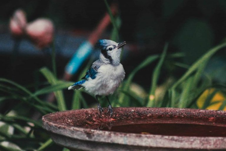 Types of Bird Baths