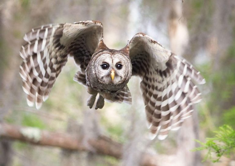 When It's Most Likely to Hear Owls Hooting?