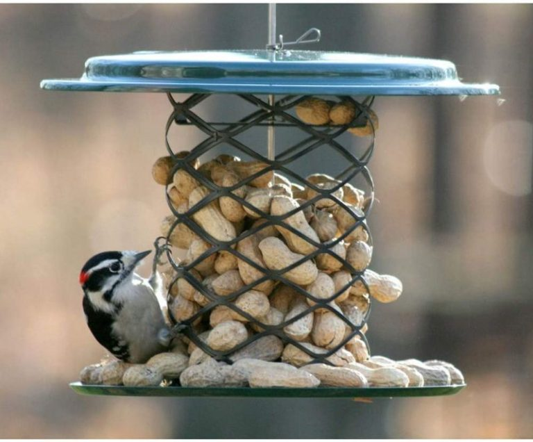 Birds Choice XWPF Whole Peanut Feeder