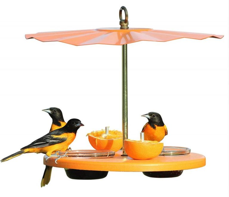 Kettle Moraine Recycled Oriole Bird Feeders