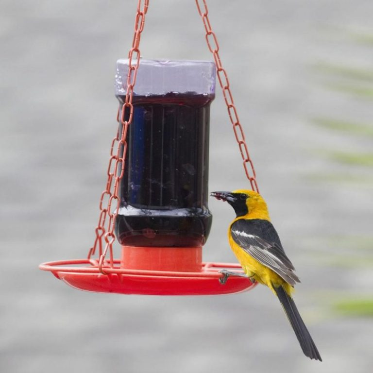 Perky-Pet 253 Oriole Jelly Bird Feeder