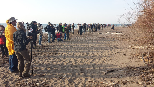 Bird watchers at Point Pelee