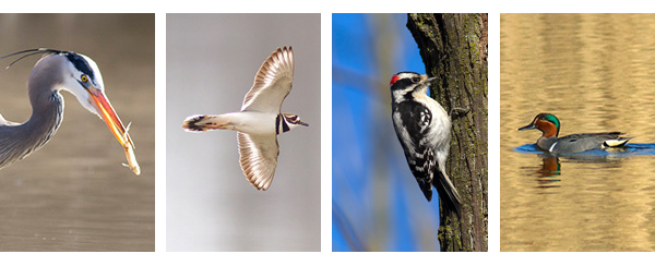 Bird found in St. Catharines Ontario