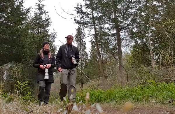 Migrating warblers at Point Pelee