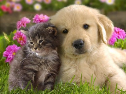 73637_cute-cat-dog-friendship-hd-wallpaper_1600x1200