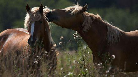 loving-horses-hd-wallpaper