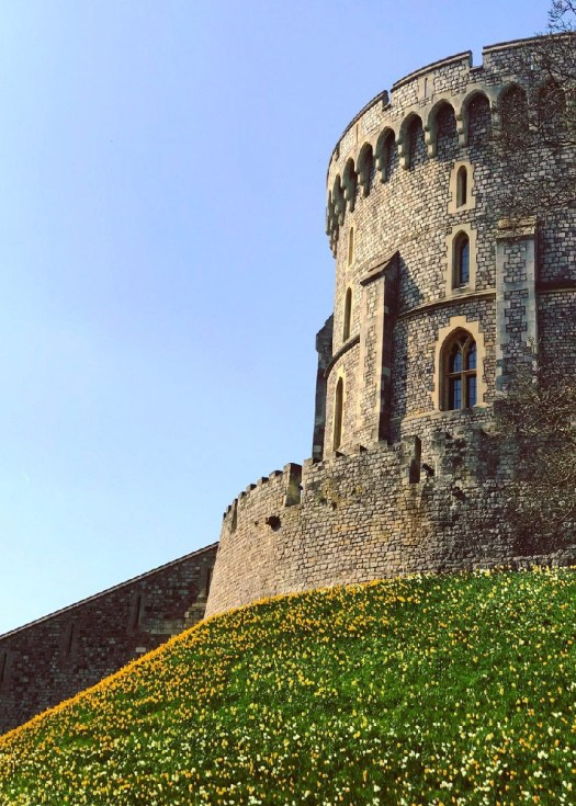 Photo of a castle tower on a hill covered in flowers