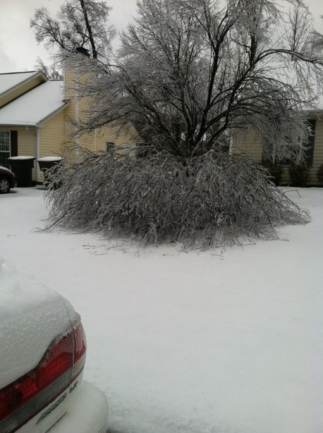 Broken Cherry Tree in Yard in Greensboro. Photo by Kristen E. Jeffers