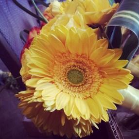Gorgeous yellow daisy