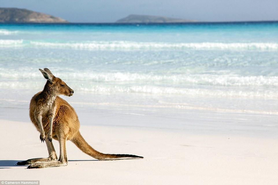 Australia Visa Resources to Get You To Oz
