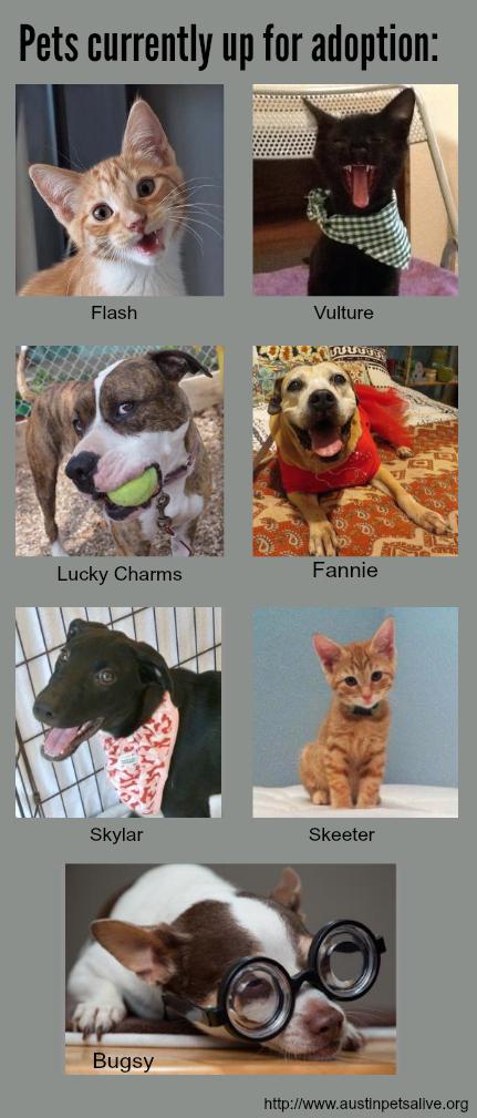 pets adoption